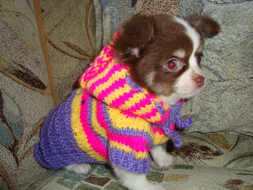 AVITO.ru - Вязанная одежда для собак, щенков и котят в Санкт-Петербурге.